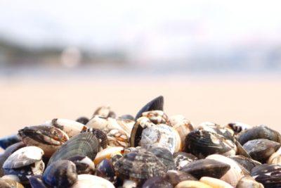 海の公園 潮干狩り コツ 貝