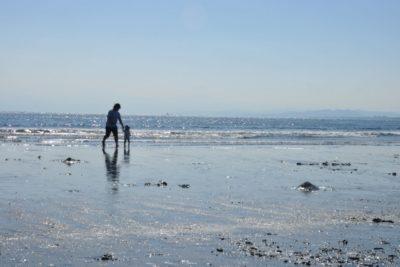一色 魚広場 潮干狩り 砂浜