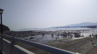 潮干狩り 愛知県 中止 会場