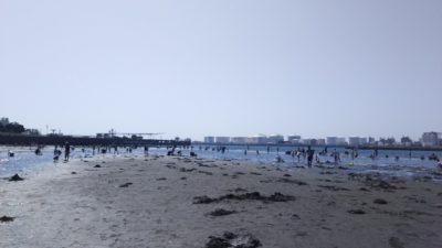 富津 潮干狩り マテ貝 海