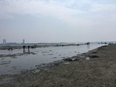 和白干潟 潮干狩り 駐車場 海沿い
