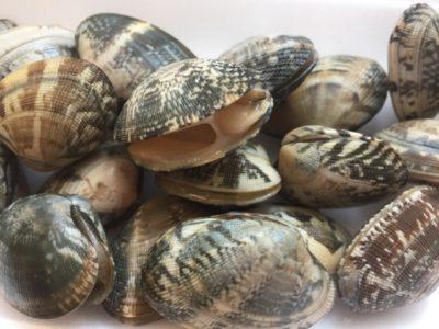 潮干狩り 千葉 貝 種類 半開き