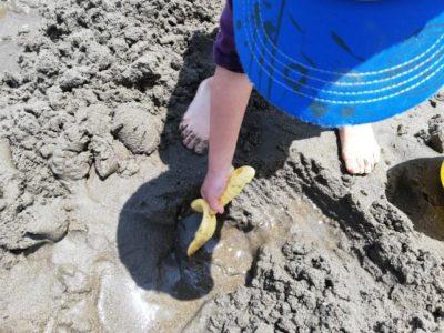 潮干狩り 1歳半 掘る子供