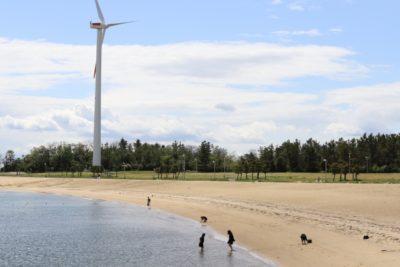 新舞子 潮干狩り 休憩所 ビーチと風車