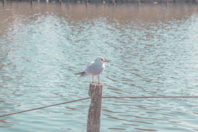 江戸川 放水路 潮干狩り ポイント 鳥