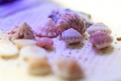 潮干狩り 広島 地御前 貝殻