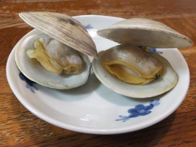 潮干狩り 千葉 貝 種類 ホンビノス