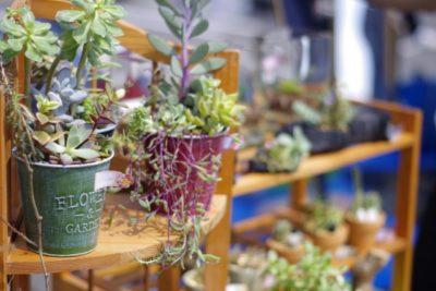 和歌山 フリーマーケット 出店 植木鉢