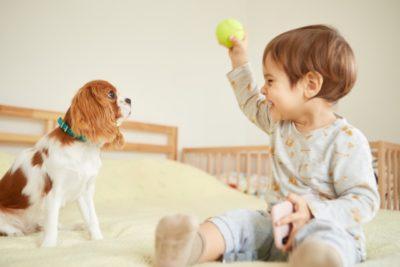 テニス 子供 いつから 犬