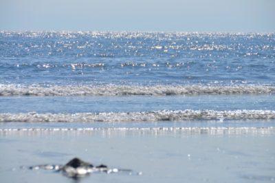 潮干狩り マテ貝 広島 海