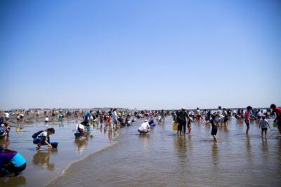 潮干狩り 三重 五主海岸 たくさんの人