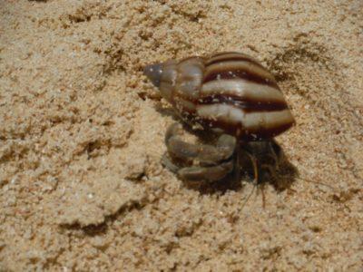 潮干狩り ヤドカリ 飼い方 砂浜