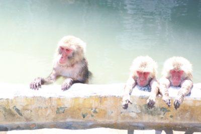 裏磐梯スキー場 子供 サルと温泉