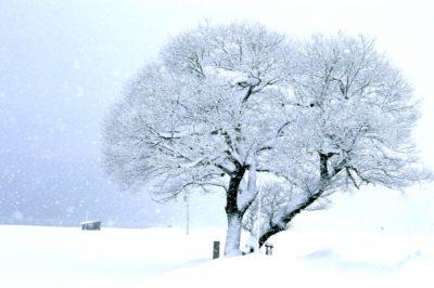 琵琶湖 バレイ スキー場 子供 木