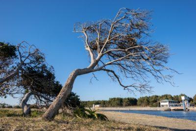 潮干狩り 愛知 衣崎海岸 木