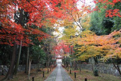 京都 子供 博物館 紅葉