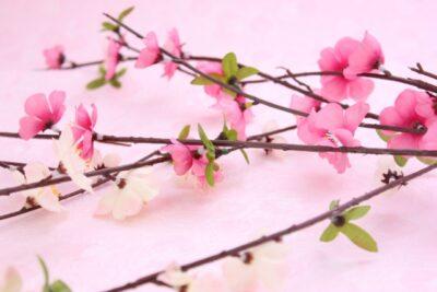 イオン 雛人形 いつから 桃の花